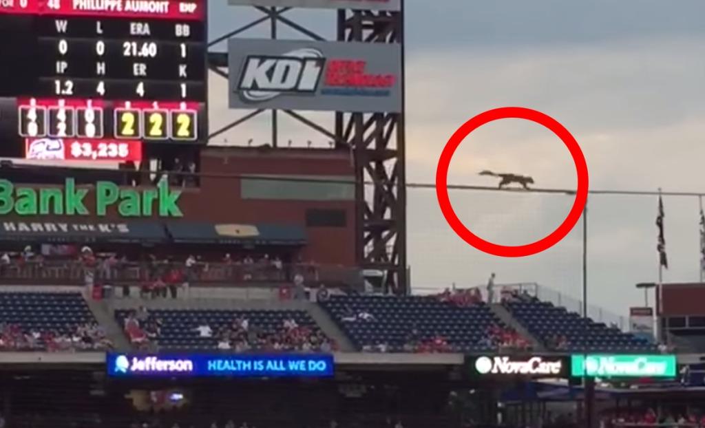 メジャーリーグの試合で「リス」のナイスプレーに観客たちが試合そっちのけで拍手喝采!!
