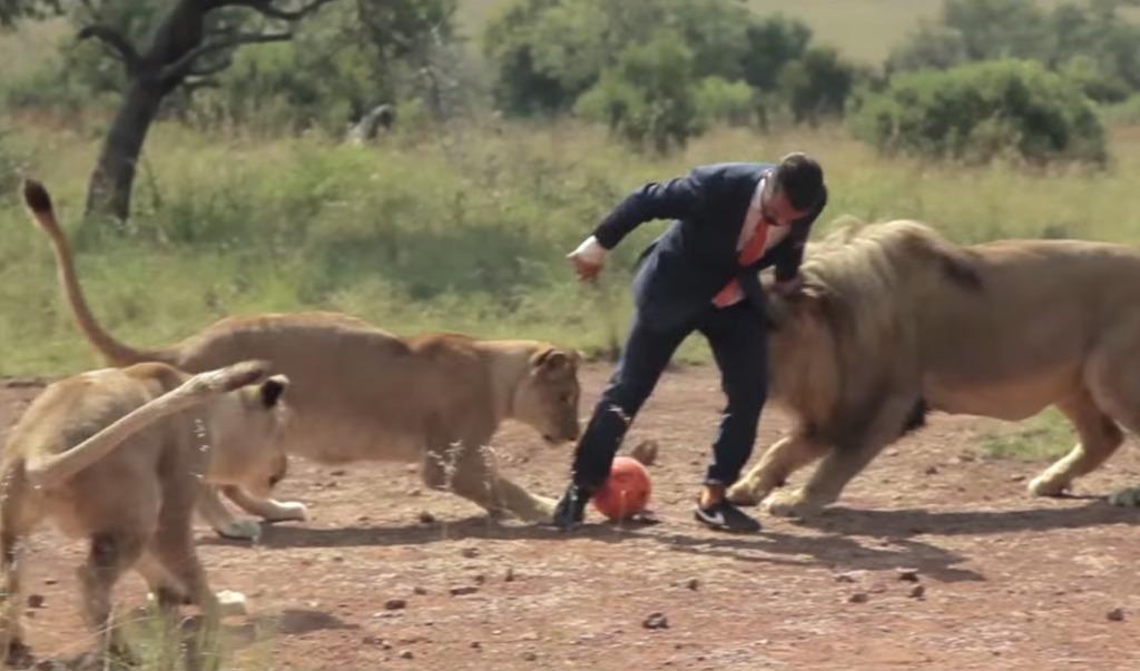 怖すぎ!ライオンたちとサッカーする謎のビジネスマン!?