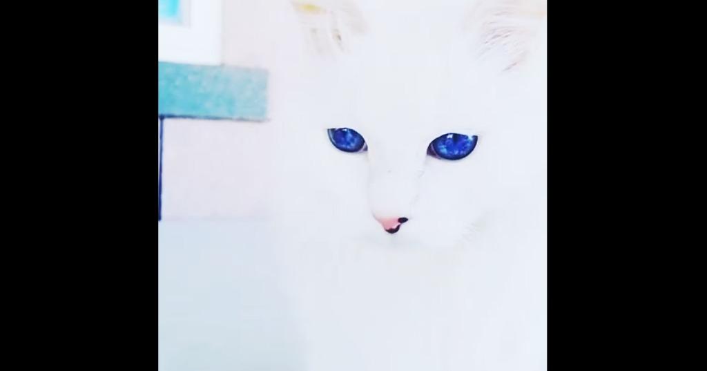 【まるで小宇宙】青く神々しい「宝石の瞳」を持つネコ。ため息が出るほど美しい!!
