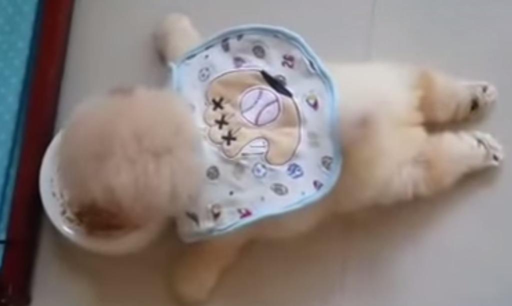 【爆笑】将来が心配!怠け者すぎる子犬のご飯の食べ方wwwwwwwwwww