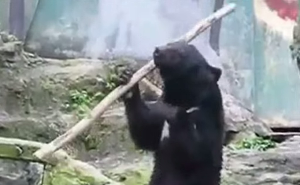 【神技】信じられない。。カンフーの達人のような「棒さばき」をする熊!!