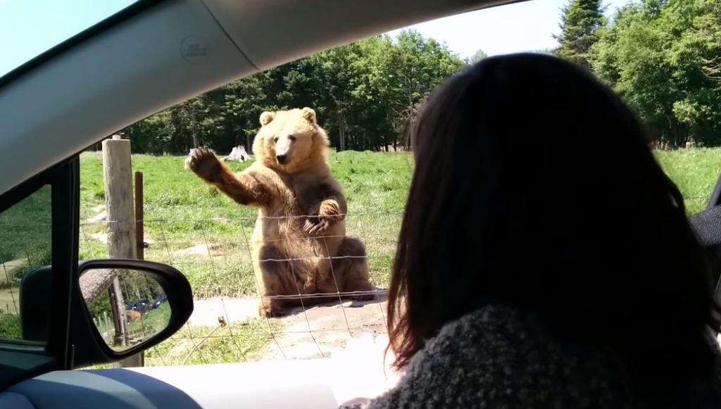 クマにパンを投げたらナイスキャッチ!!