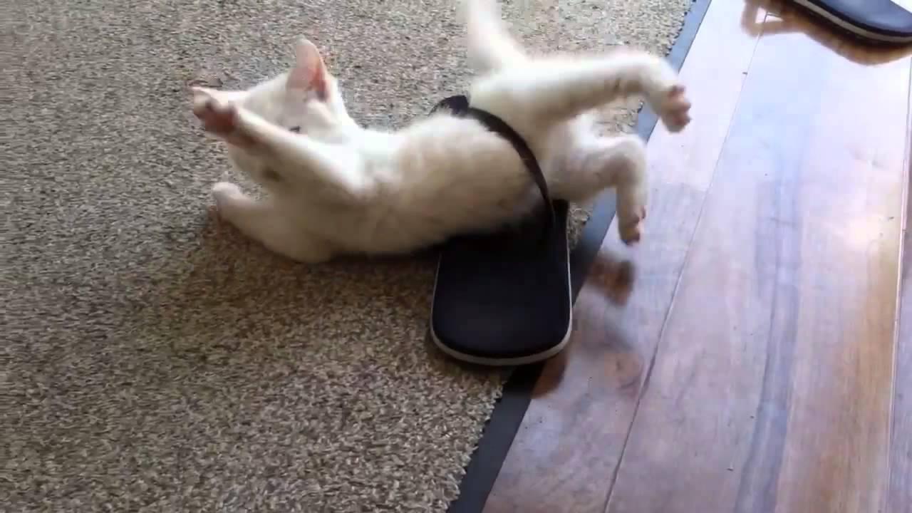 かわい過ぎ!ビーチサンダルに挟まった子猫の大脱出!