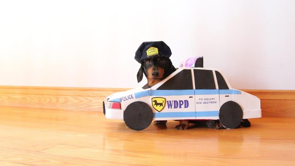 これが本当の「犬のおまわりさん」!犯人犬を勇敢に追いかける!!