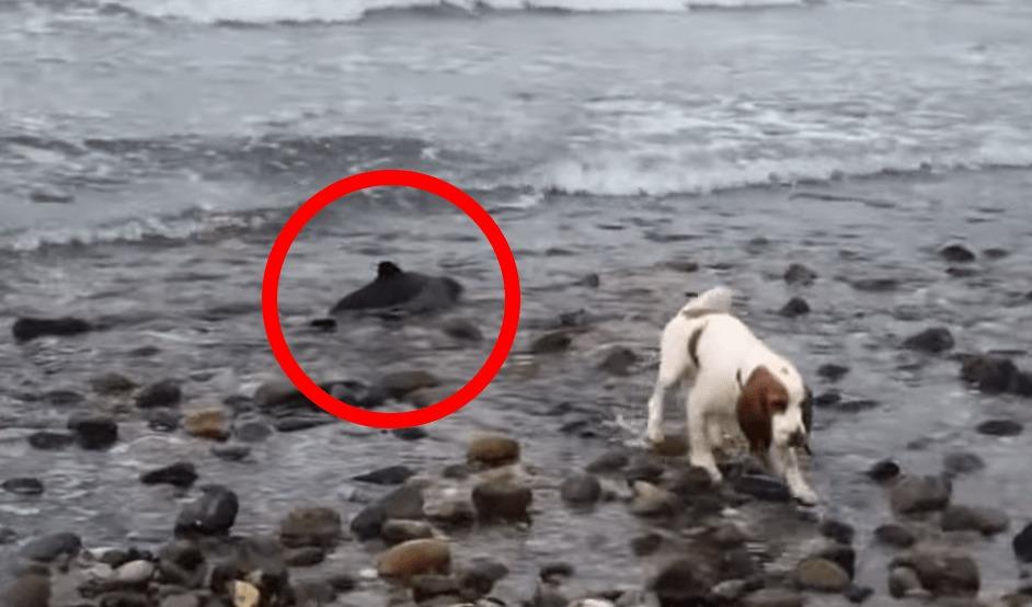 愛犬がビーチに打ち上げられた赤ちゃんイルカを発見!無事救出!!