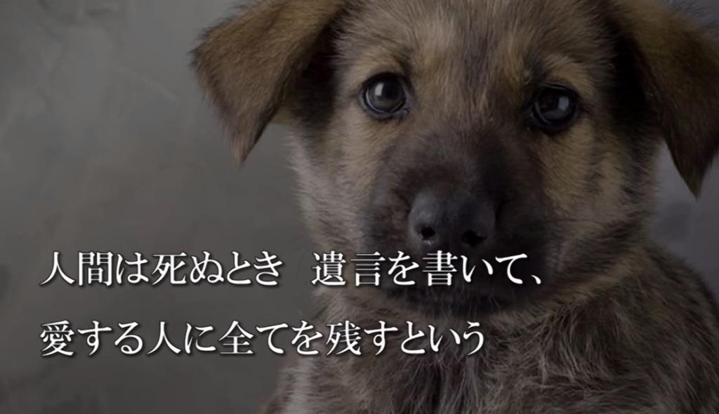 「もし、僕が死んだら、、」犬の遺言に綴られた言葉が胸に刺さる。。