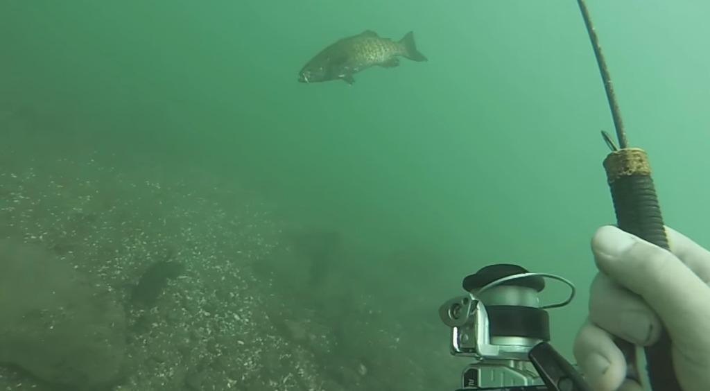 これは斬新!水中で魚の様子を見ながらバス釣り!!