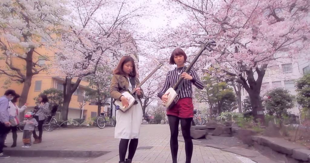 これぞ「和」ガール!桜満開の下、三味線ガールズのする演奏が超カッコイイ!!