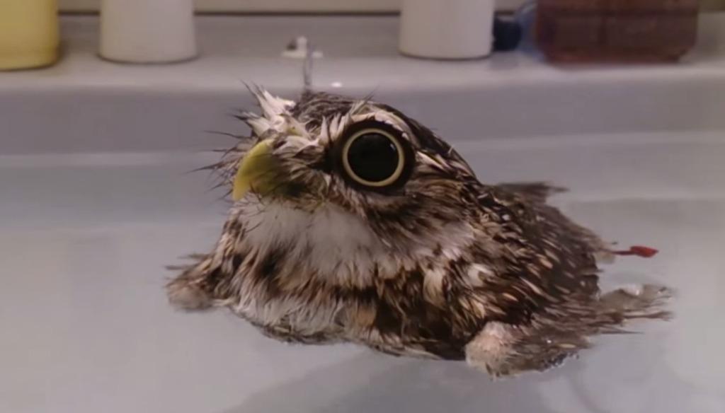 小さなフクロウが気持ち良さそうにプカプカ浮かぶ姿に、世界中がメロメロ♪