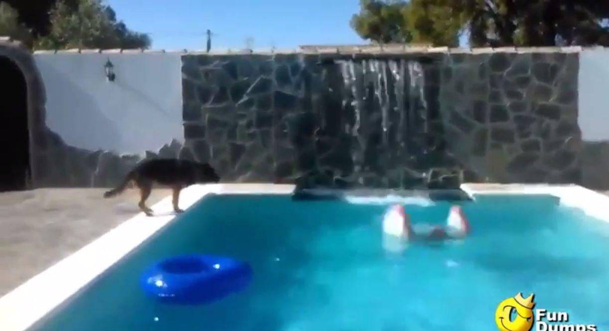 これが「犬は人類の最高の友達」といわれる理由!溺れている人を身を挺して助ける犬!!