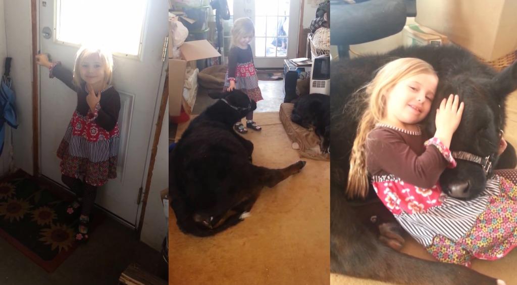 少女「ママ、ペットを拾ったの。飼ってもいい?」→部屋の中に子牛がくつろいでいてママびっくり!!