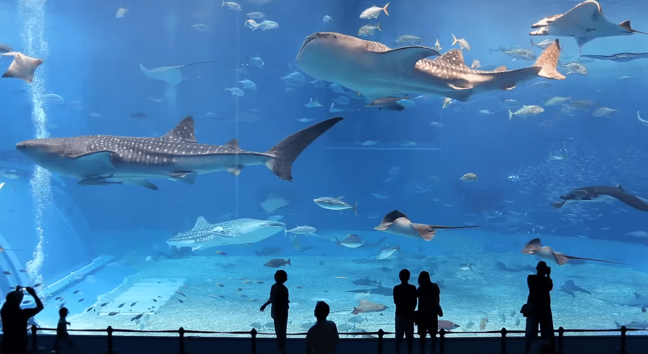 沖縄に行ったら訪れたい!世界で2番目に大きな水槽「黒潮の海」の迫力がスゴい!!