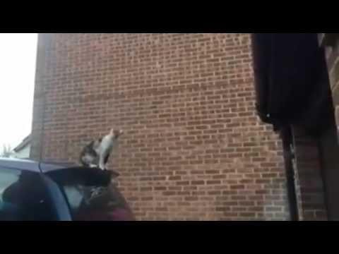 車の上から屋根へ猫が大ジャンプした結果【動画】