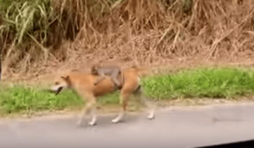 【感動】優しい。母親が死んでしまった子猿の面倒を見る野良犬