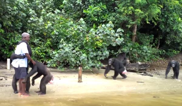 「今までありがとう」まるで人間のように飼育員との最後の別れを惜しむチンパンジー
