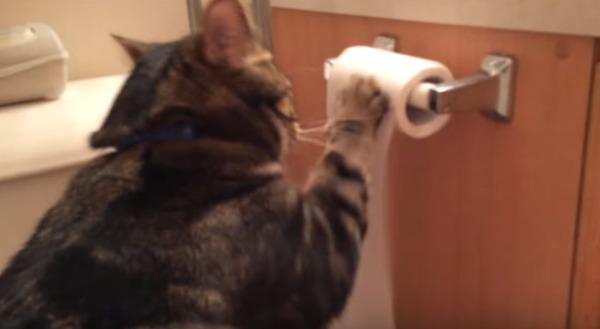 トイレットペーパーをクルクルする猫。もったいないなぁと思ったら、飼い主さんも爆笑の予想外の展開に!!