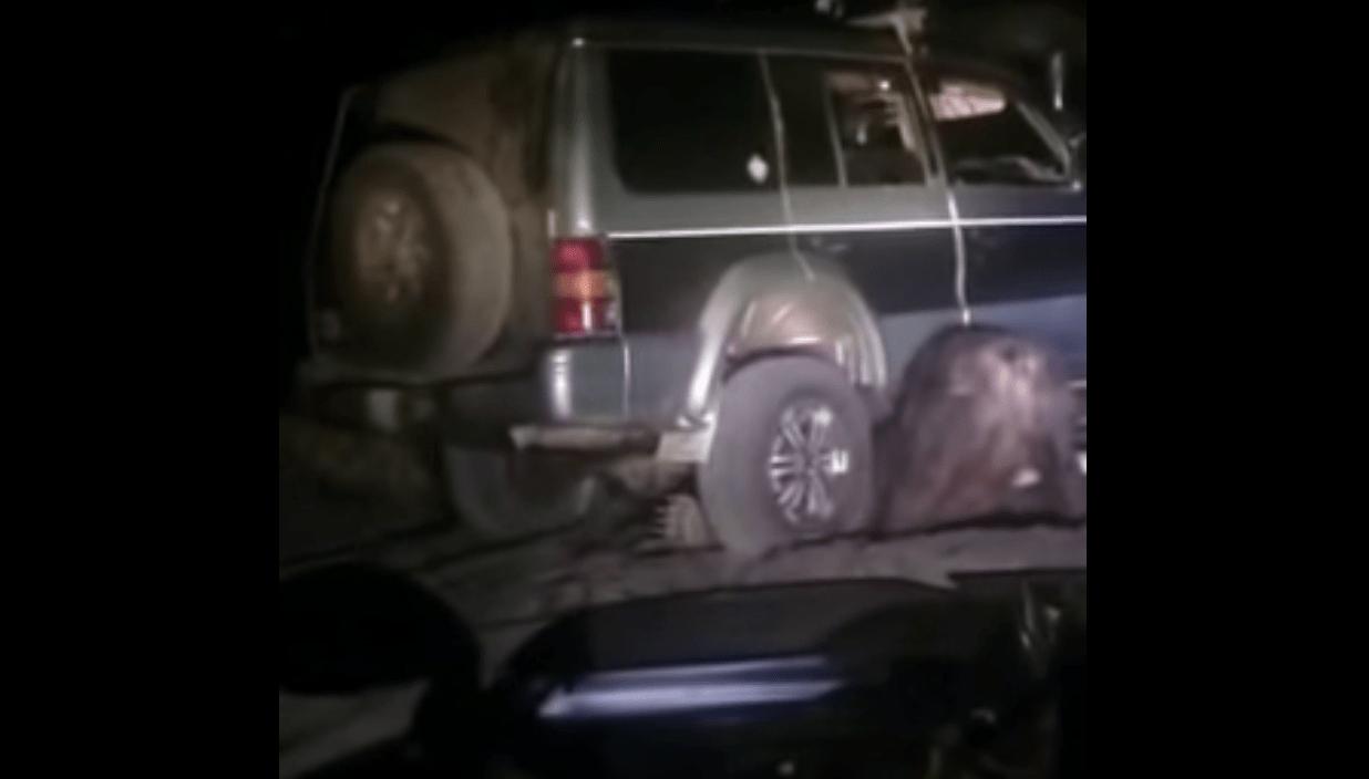 車の下敷きになっていた熊が自力で脱出!怒った熊の人間とは異次元の強さの反撃に驚愕!!
