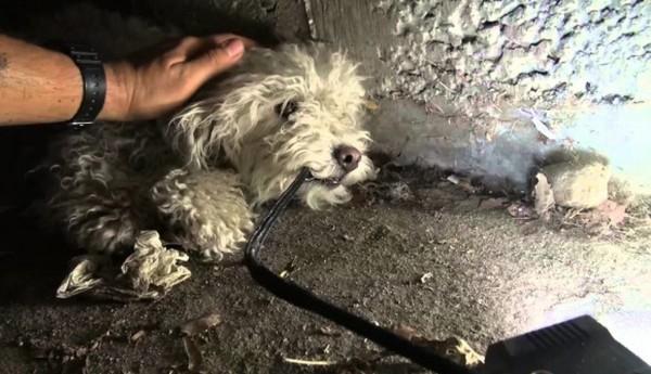【感動】暗くジメジメした下水道で、たった2匹で必死に生きてきた兄弟犬を保護!!