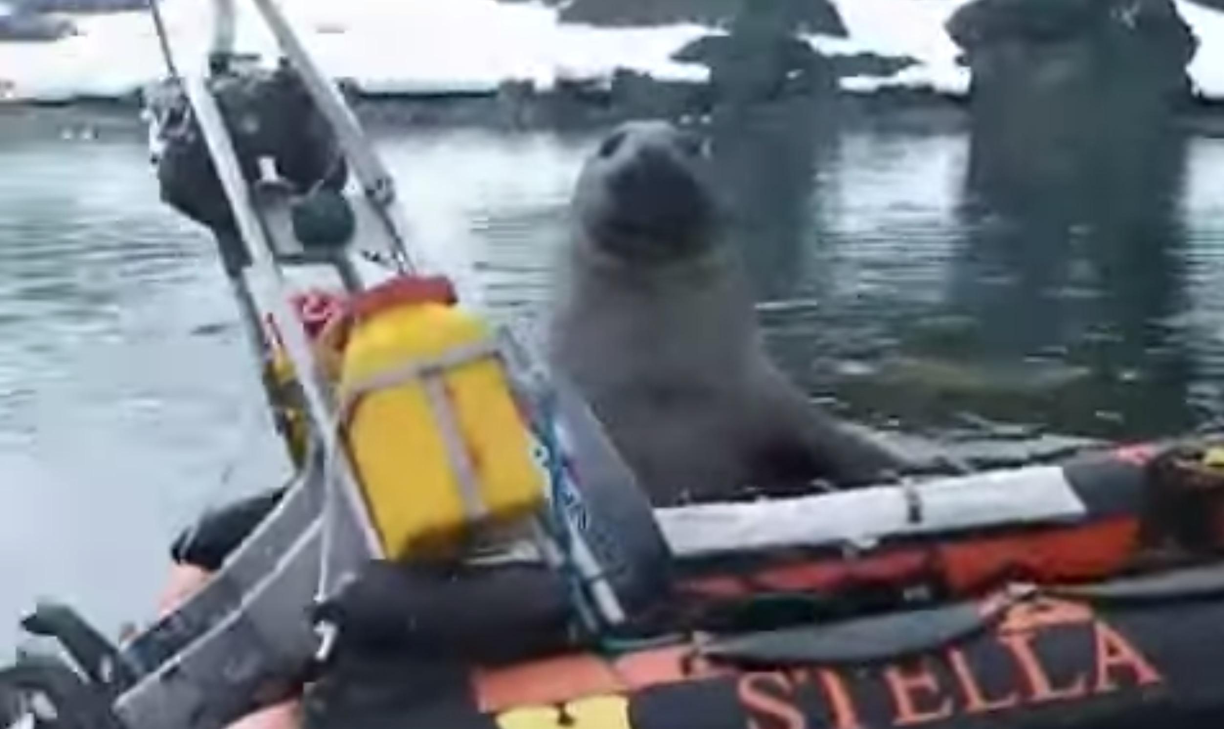 南極大陸でボートが丸ごと持ち去られそうになる事件が!?可愛すぎる犯人に癒されるwwwww