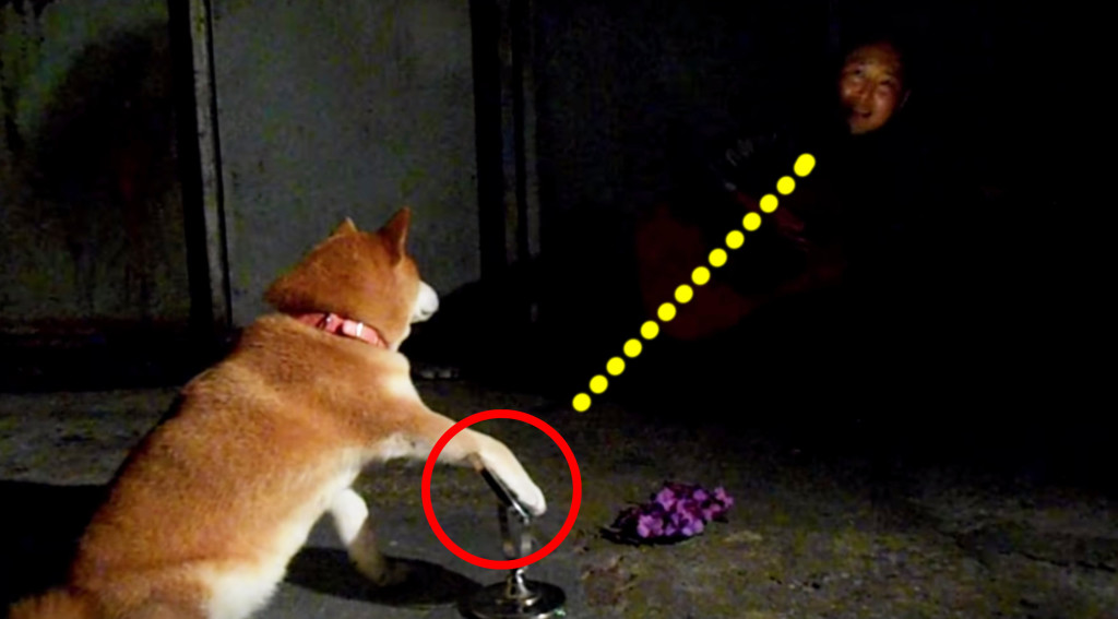 【爆笑】ステージの照明さんをやる犬!!