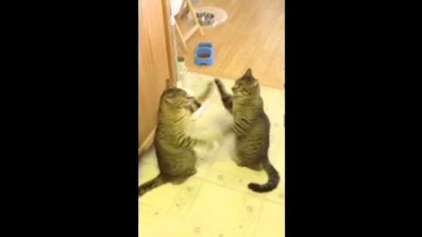 猫パンチ!猫の対決がまるで鏡のようでおもしろい!