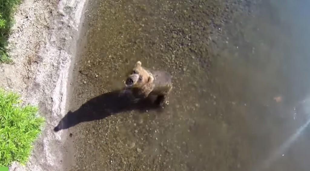 野生のクマをドローンで至近距離から空撮することに成功!これが自然体なクマの生活!!