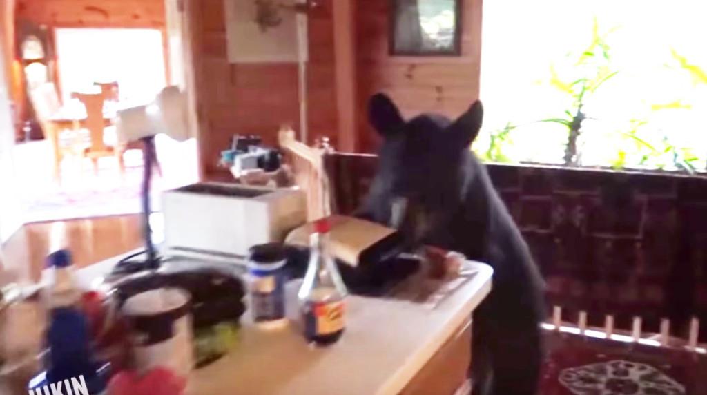帰宅したら熊がキッチンに!声で威嚇して追い払った!!