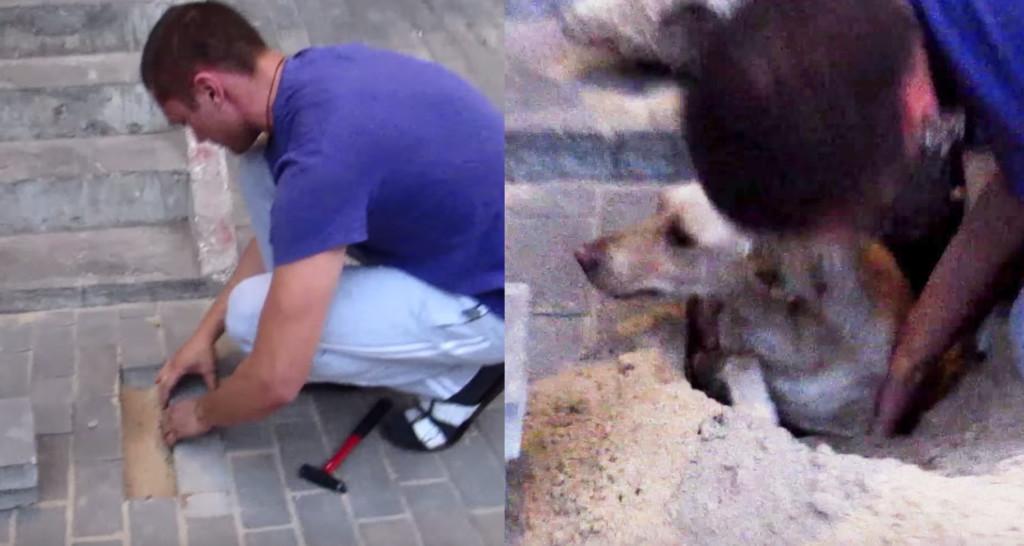 歩道の下から犬の鳴き声が?!優しい男性が掘り起こした結果、なんと生き埋めにされた妊娠中の犬が!!