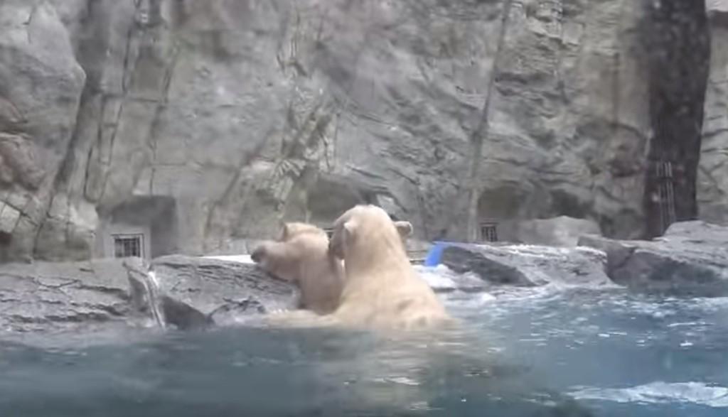 水に落ちた子クマ!すぐに駆けつけたお母さんの助け方が、愛に溢れるものだった。