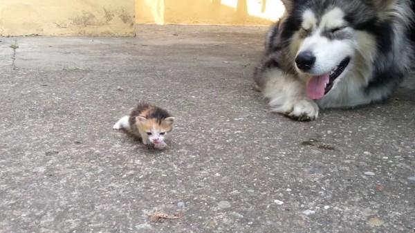 赤ちゃん猫をおそるおそる可愛がる犬に萌え死んだ。。