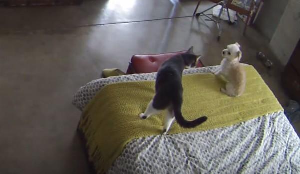 さすが猫先輩。。鳴きわめくワンちゃんを一瞬で黙らせてしまう