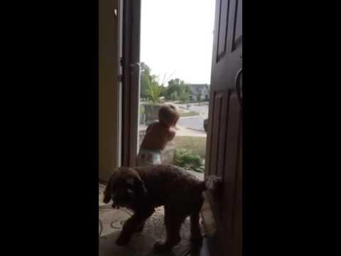 【ほっこり動画】パパの帰宅に大喜びする犬と赤ちゃん