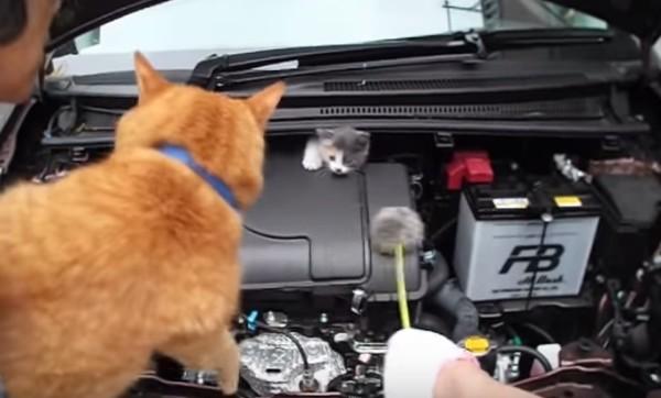 エンジンルームに子猫が!しかし、怯えて出て来ない。。