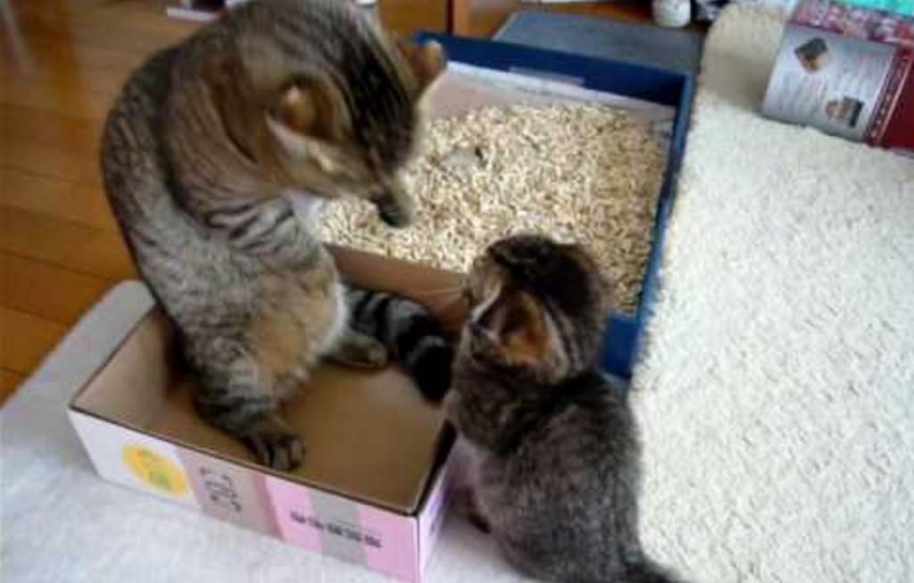 「ポカポカポカポカ」お父さんに連続ネコパンチをする子猫!!