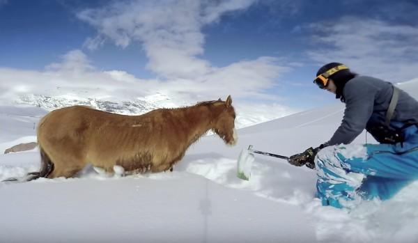 スノーボードをしていたら、雪で動けなくなっている凍死寸前の馬を発見!!