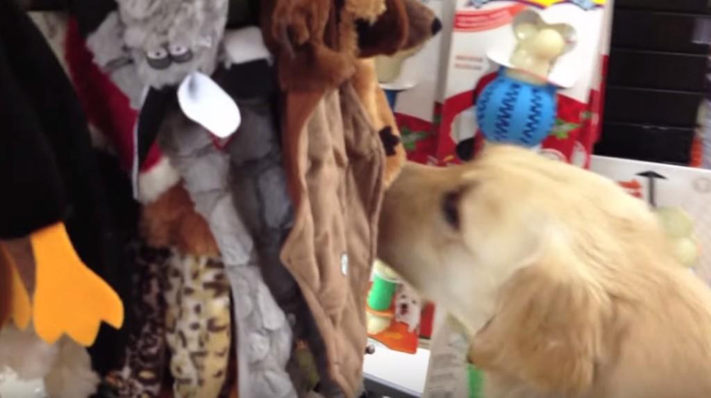 「なんでも選んでいいの?!」殺処分から救われた犬が、初めてのおもちゃ選びで戸惑う姿に涙。。