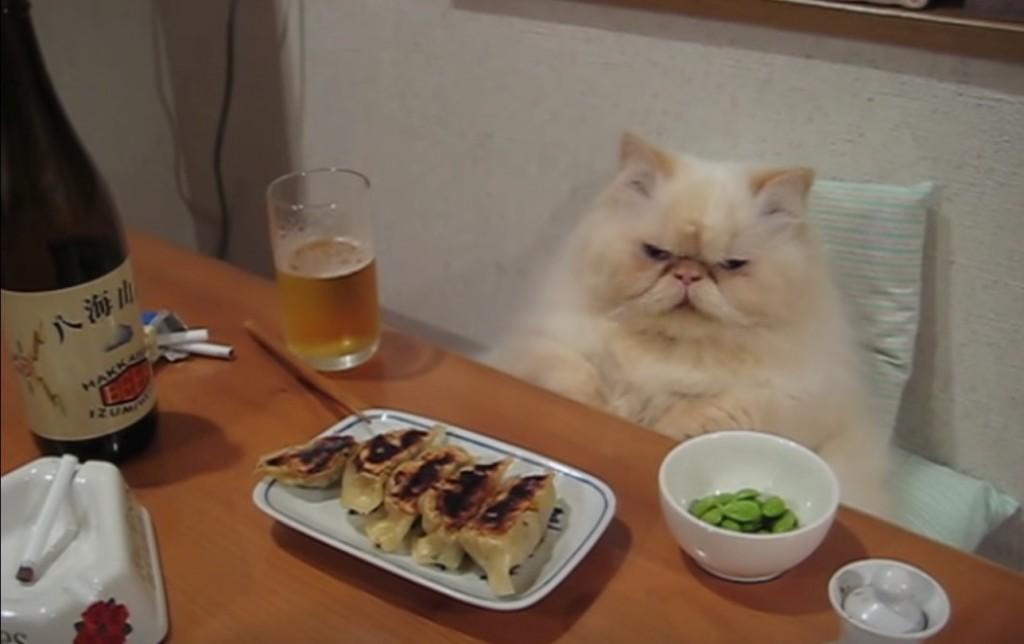 うちのオヤジ猫