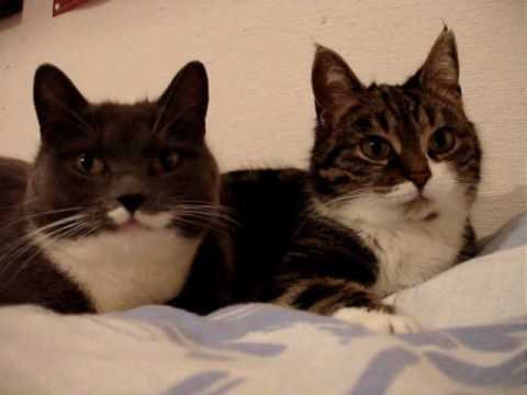 なにを相談しているの?2匹の猫が、にゃ〜にゃ〜会話