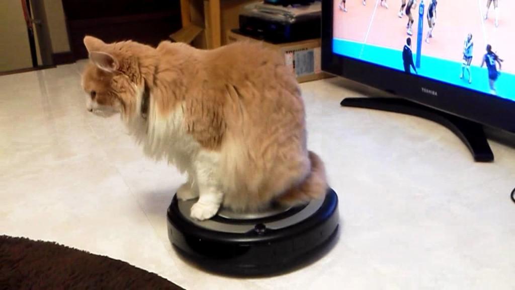 猫ちゃん。ルンバでぐるぐる〜〜。