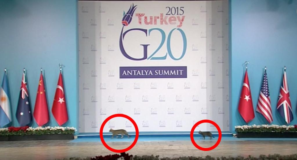 まさに忍猫!「G20サミット」の厳重な警備を突破し、3匹の猫が潜入して話題に!!!