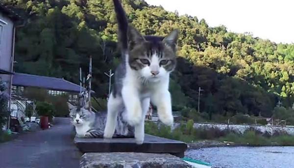 やたらイケメンな猫たち!猫のスーパースロー映像をたくさん撮ってみた!!