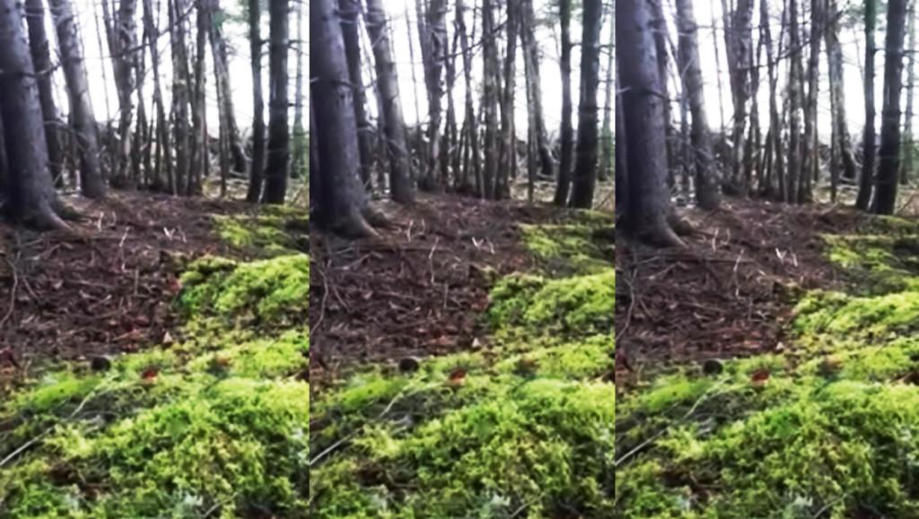 【自然の神秘】大地が呼吸をしているようにうごめく不思議な森