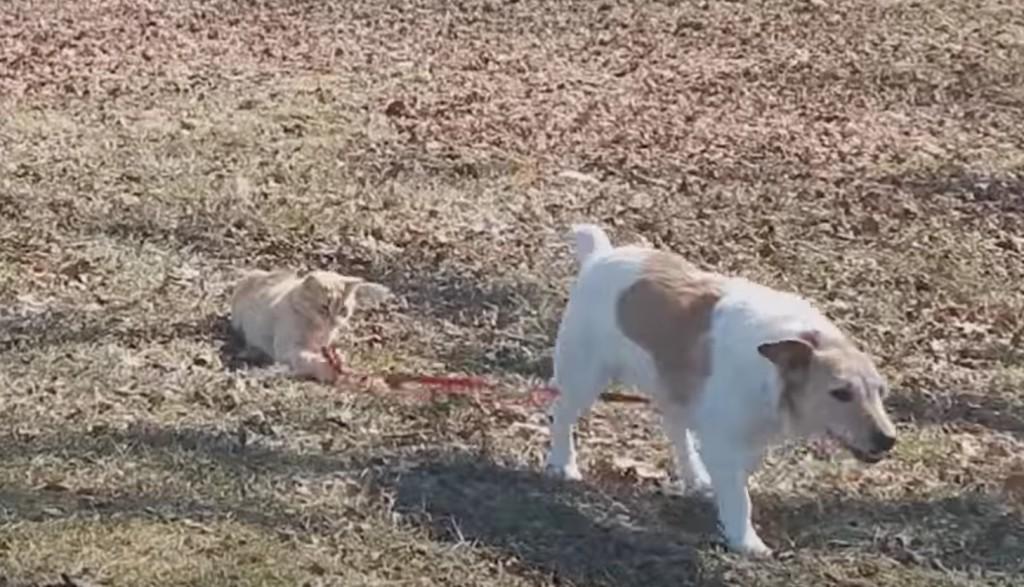 「まだ待てでしょ!」飼い主が猫の犬wwwwwwwwwww