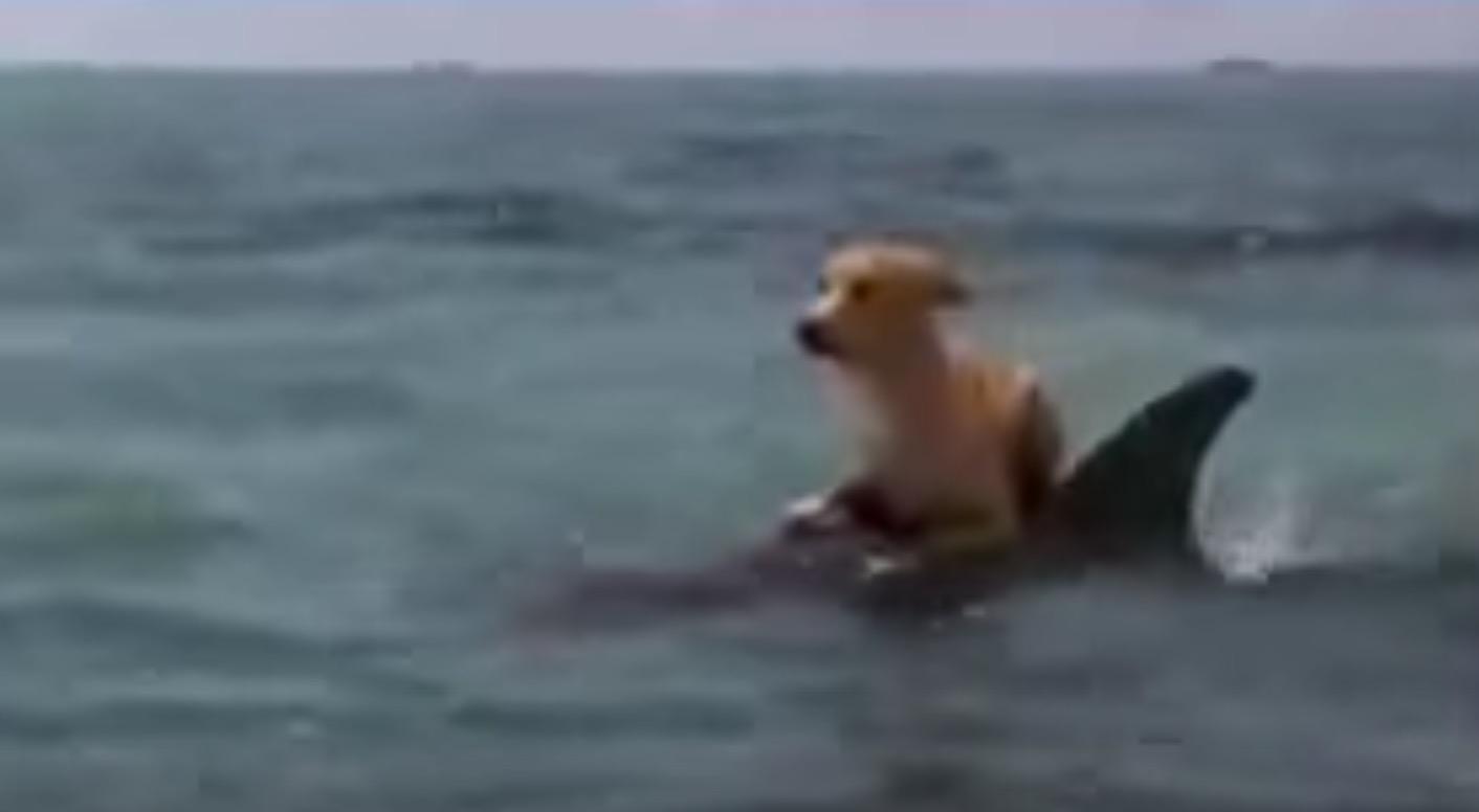 【感動】海で溺れていた犬を助けたのはなんとイルカ!種を超えた愛に感動!!