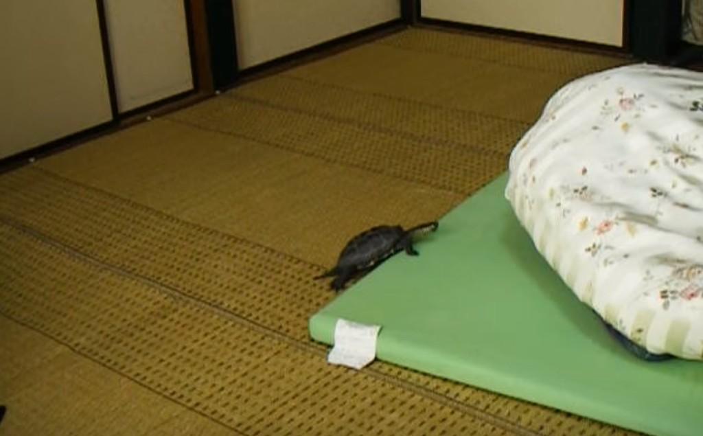 飼い主さんの事が大好きなカメ。一緒に寝たくて、何度も布団に入ろうとする姿が可愛い!!
