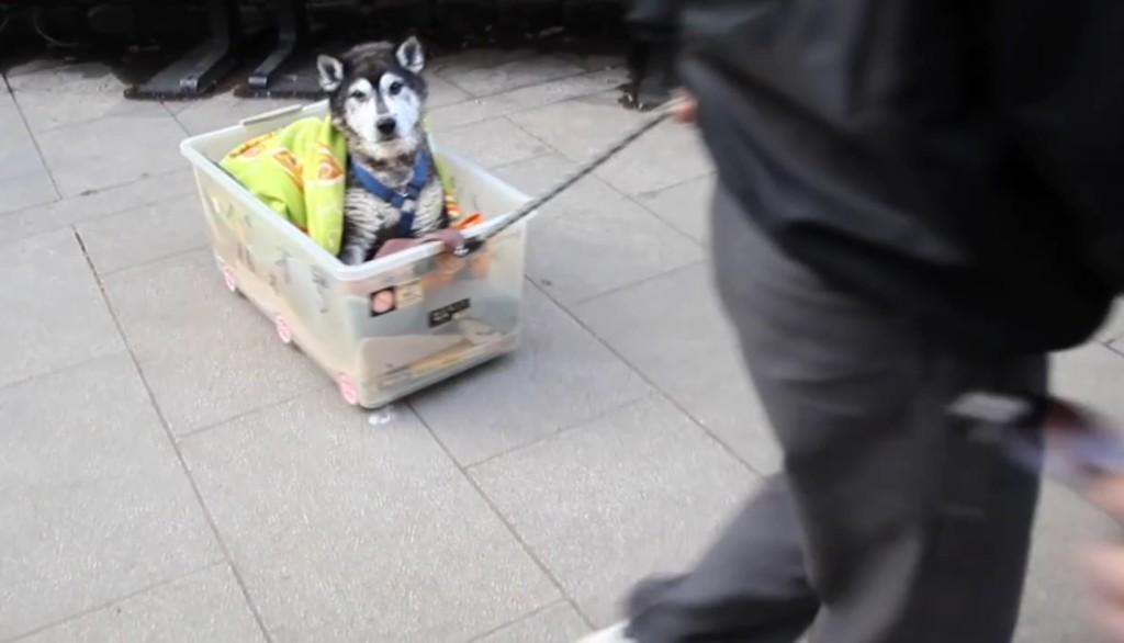 年老いて散歩ができなくなった老犬のために、飼い主が考えた方法が愛に溢れている!!