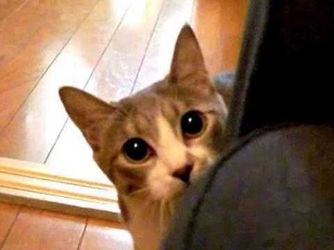 猫と、だるまさんがころんだ。だんだん近づいてくれます!かわいい〜。