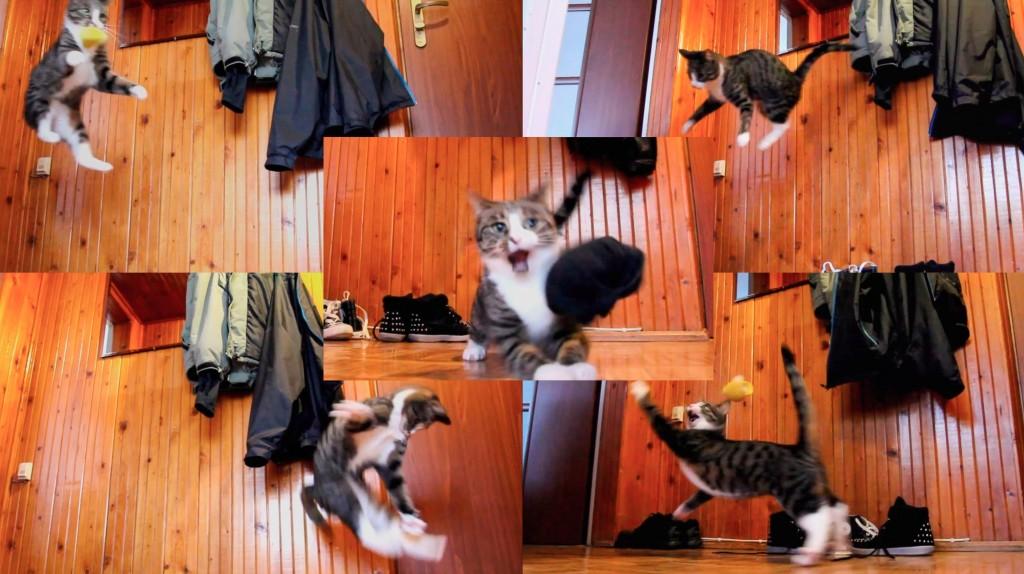ぴょ〜ん、ぴょ〜ん、ジャンプ猫。三角飛びまでやってる!