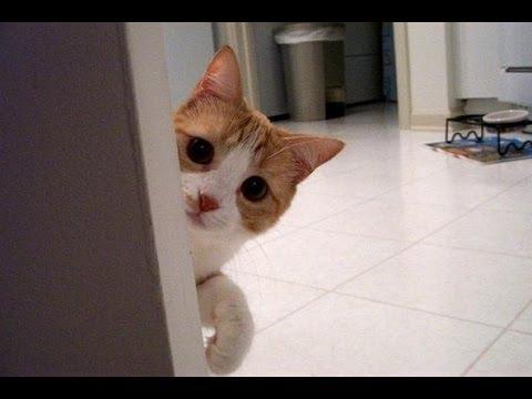 猫と「だるまさんがころんだ」で遊んでみた。わああ〜、いつの間に近くに!