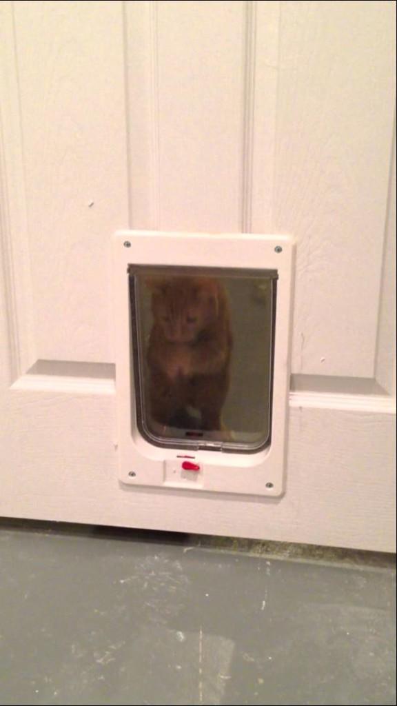 猫ちゃん、おかえり〜ってアレ?入れない?「お〜い!部屋に入れてよ!」